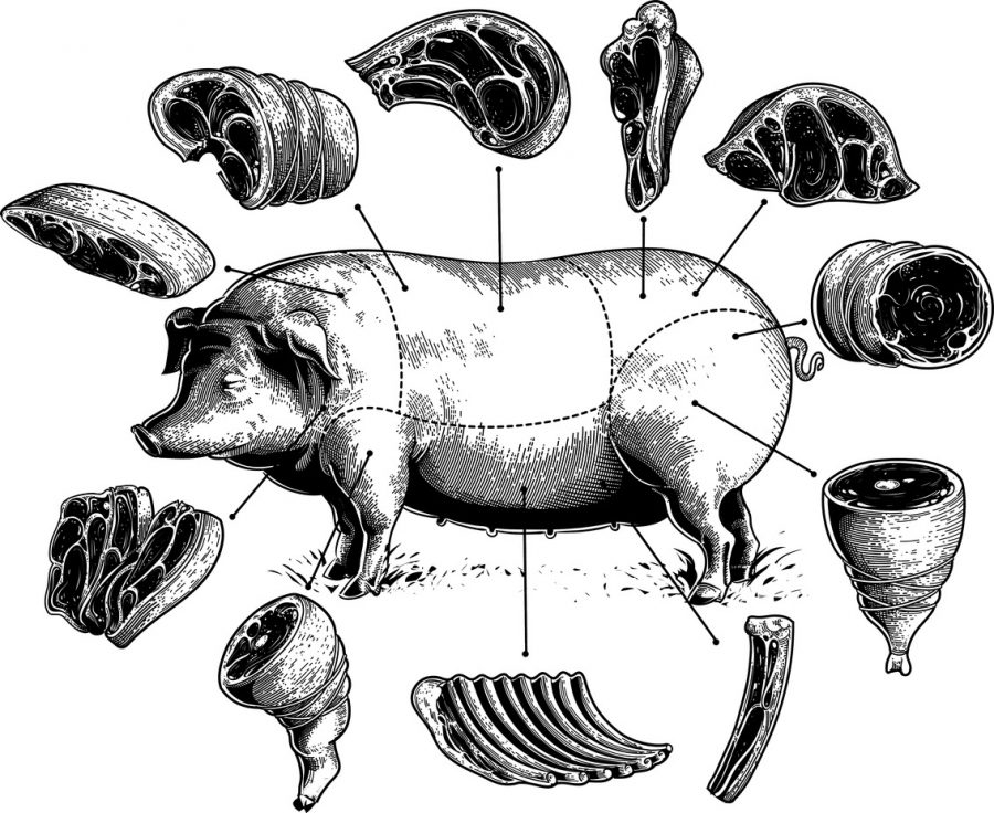 Illustrations of pork meat cuts.