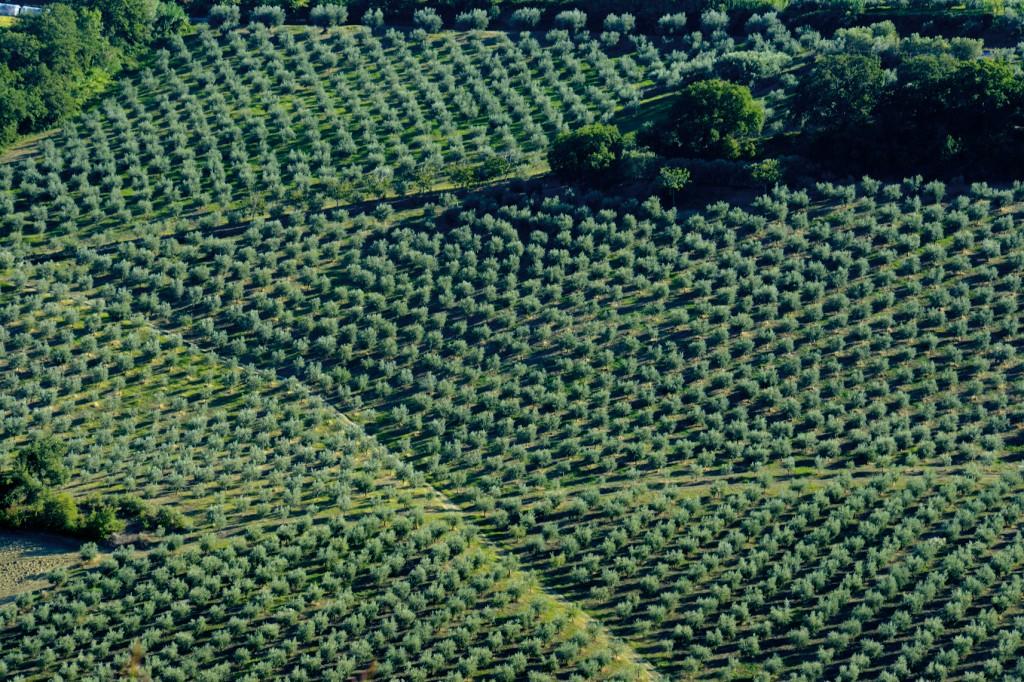 veduta aerea di uliveti Abruzzesi