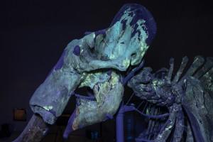 UV del cranio