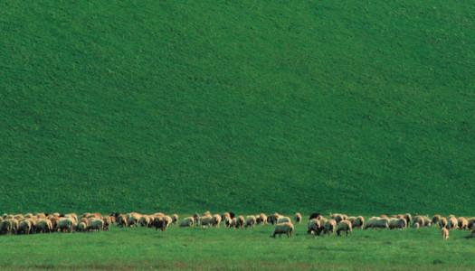 Un pomeriggio da pastori con Slow Food Chieti