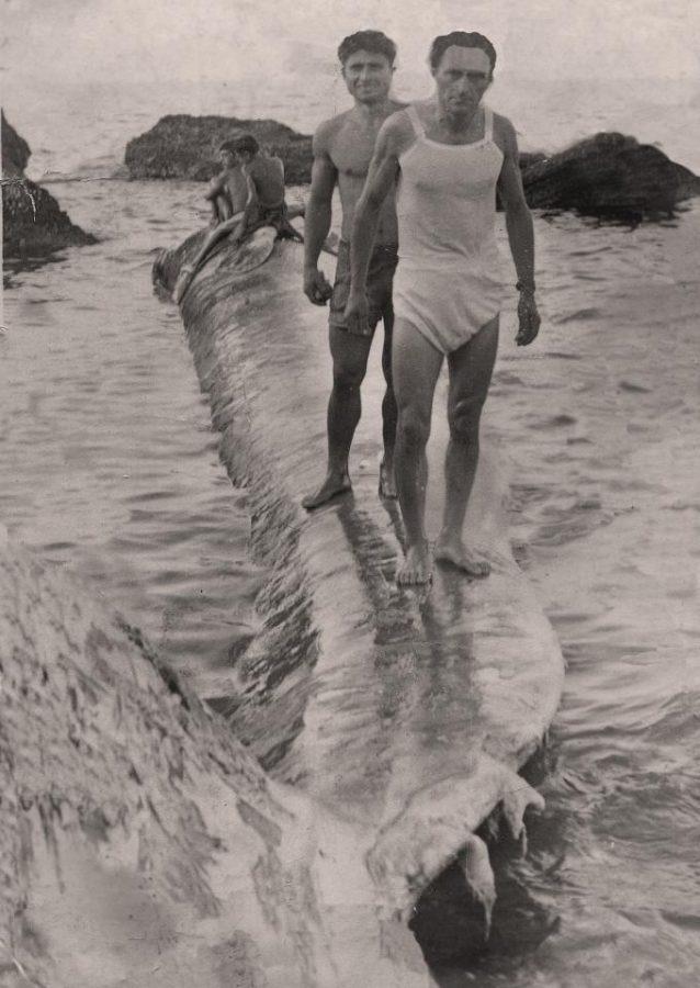 Ettore Verì e Cesare Annecchini sul corpo della balena (foto per gentile concessione di Rinaldo e Pietro Verì)