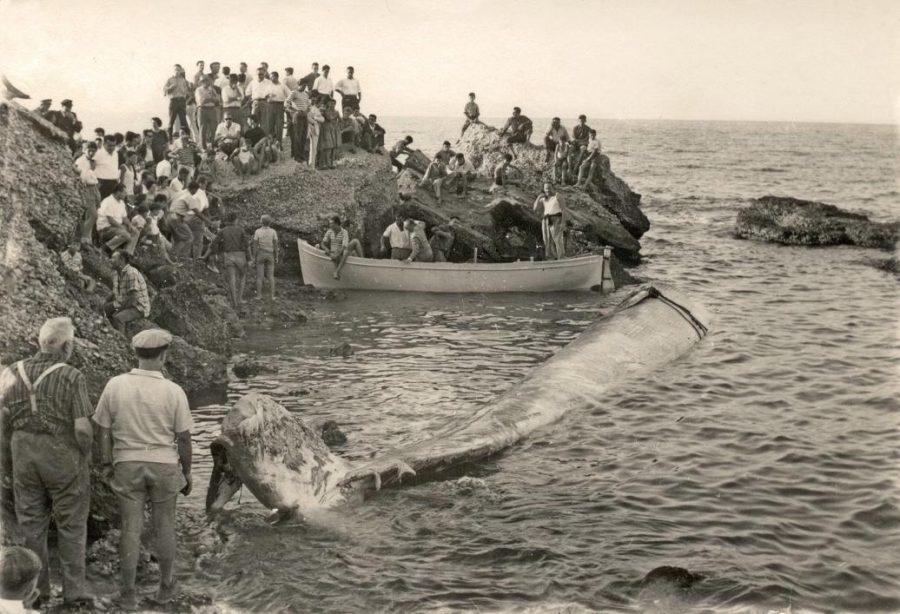 Gli abitanti della contrada accorsi per vedere la balena (foto per gentile concessione di Rinaldo e Pietro Verì)