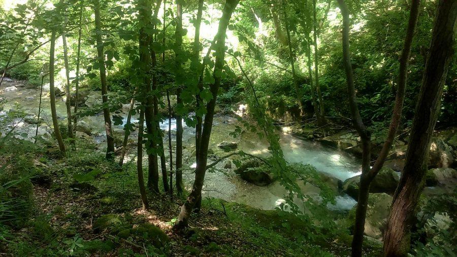 Il fiume Orfento nella faggeta (ph. Ivan Masciovecchio)