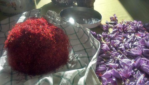 Festa dei solchi, sfide tra chef e cene gourmet per celebrare l'oro rosso d'Abruzzo