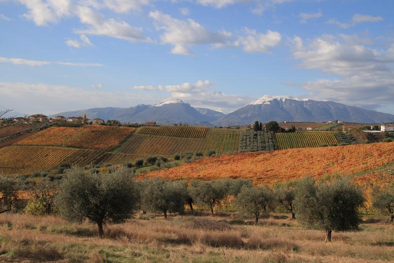 Panorama delle colline teramane (ph. sito Camminata tra gli olivi)