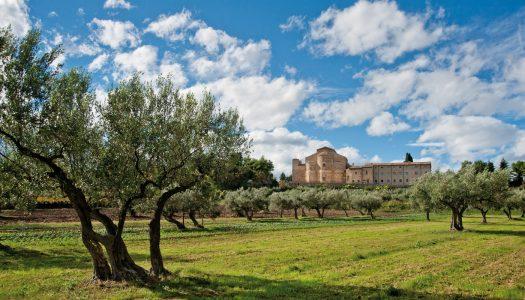 Camminata tra gli olivi d'Abruzzo