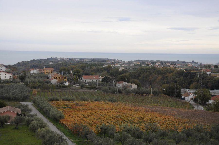 Vigneti con vista sull'Adriatico in provincia di Chieti (ph. Ivan Masciovecchio)