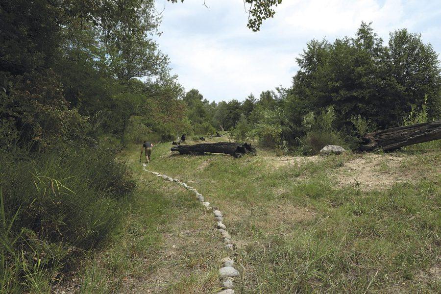 Sebastiano A. De Laurentiis, La collina degli alberi morti (ph. Studio Azzurro)