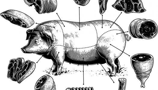 Con Slow Food Chieti e la CdG alla scoperta del maiale nero