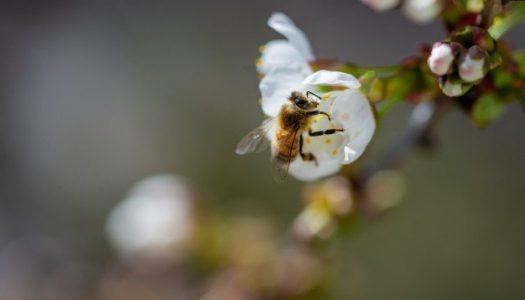 """""""Bee Natural Festival"""", a Montebello di Bertona due giorni dedicati alle api e alla biodiversità"""